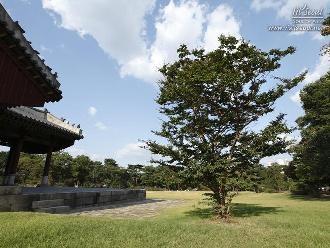정자각 옆에 있는 배롱나무