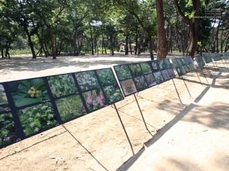 태릉의 야생화 사진 전시 모습