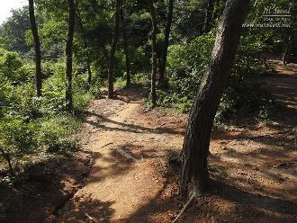 능골산 생태숲탐방로