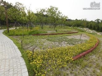 주차장 옥상에 야생화와 자작나무 등을 심어놓은 '초화원'