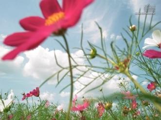 반포 한강공원에 핀 꽃