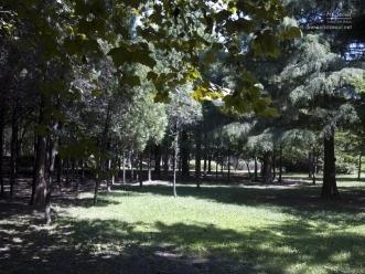 양재 시민의 숲 사진 2