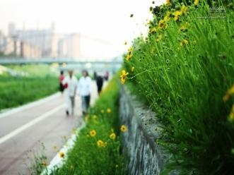 도로 옆 노란꽃