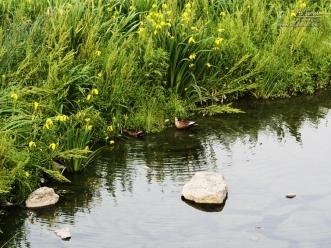 물위의 철새들