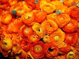 상큼한 주황색이 사랑스러운 장미꽃