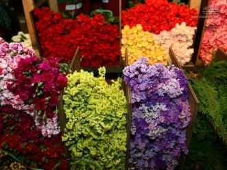 진열된 색색의 꽃들