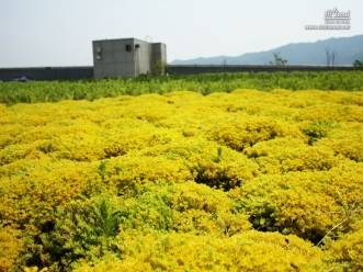 꽃으로 가득찬 옥상정원